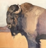 SOLD BisonBold